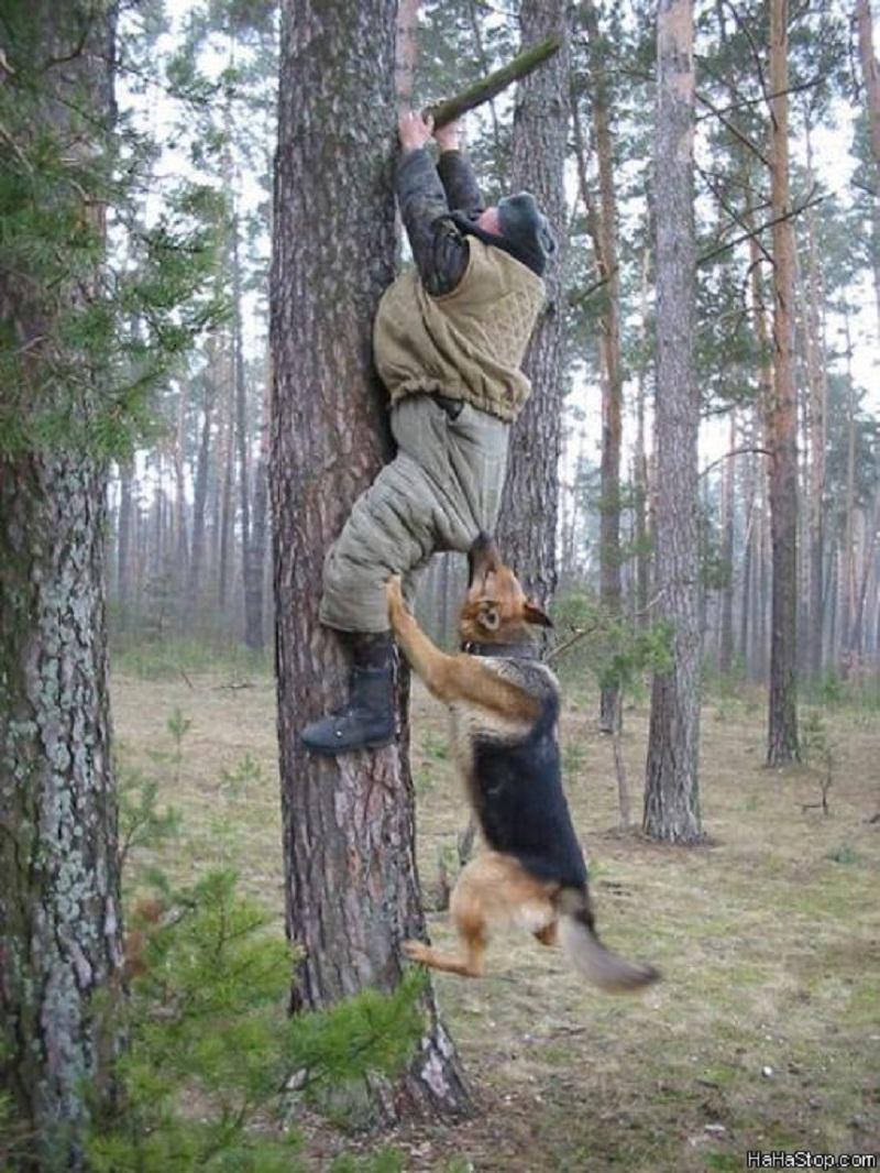Re: ده نژاد خطرناک سگ در دنیا